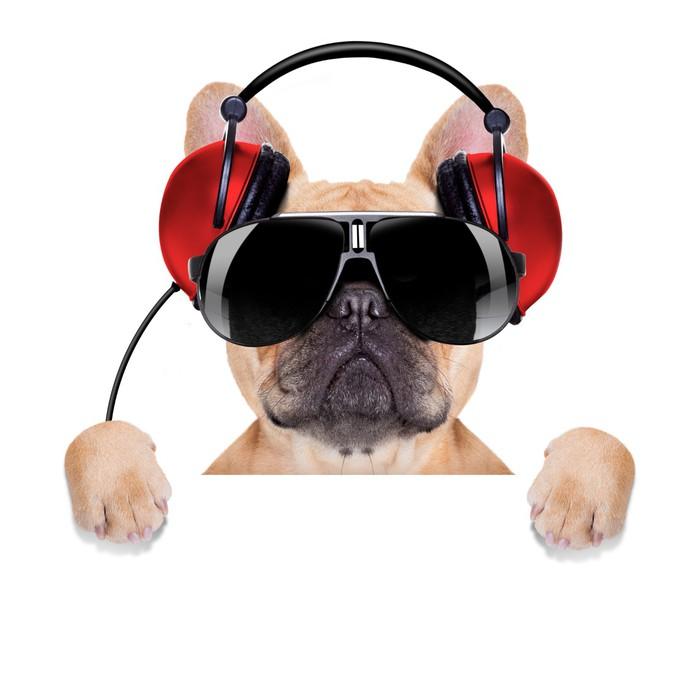 Vinylová fototapeta Dj disko dog - Vinylová fototapeta