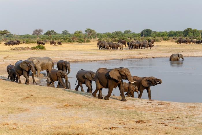 Vinylová Tapeta Několik slyšel afrických slonů na napajedlo - Témata