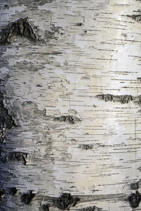 Papier peint tronc de bouleau pixers nous vivons pour - Tronc de bouleau ...