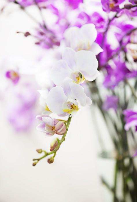Vinylová Tapeta Bílý Phalaenopsis orchidej květina větev - Domov a zahrada