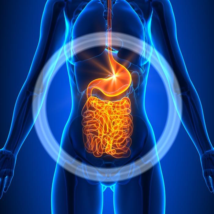 Fototapete Guts - Weibliche Organe - Human Anatomy • Pixers® - Wir ...