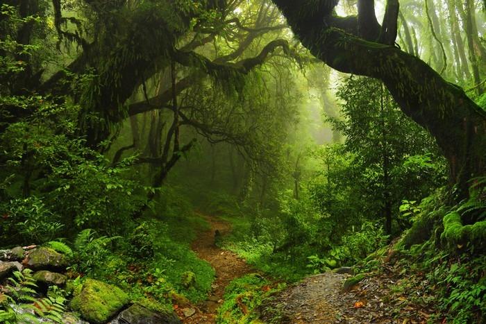 Carta da Parati in Vinile Foresta Nepal - Brasile