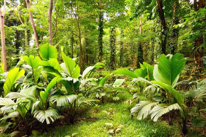 papier peint for t tropicale mah seychelles pixers nous vivons pour changer. Black Bedroom Furniture Sets. Home Design Ideas