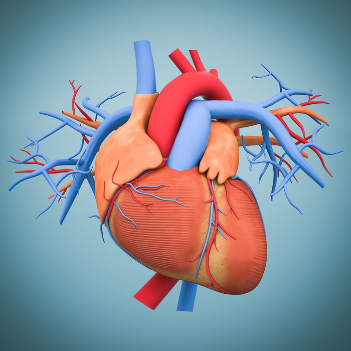 Aufkleber Modell des Herzens • Pixers® - Wir leben, um zu verändern