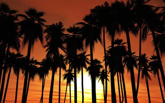 Vinylová Tapeta Západ slunce Palmy - Ostrovy