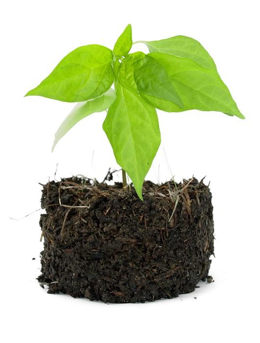 papier peint plante en pot avec son compost expos sur un fond blanc pixers nous vivons. Black Bedroom Furniture Sets. Home Design Ideas