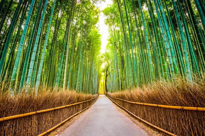 Fototapete Bambushain In Japan Pixers Wir Leben Um Zu Verandern
