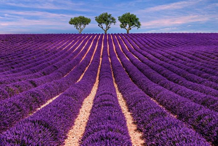 Vinylová Tapeta Lavender pole Letní západ slunce krajina se stromem - Krajiny