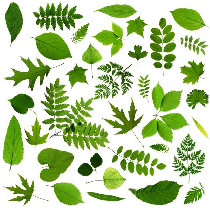 papier peint toutes sortes de feuilles vertes pixers nous vivons pour changer. Black Bedroom Furniture Sets. Home Design Ideas