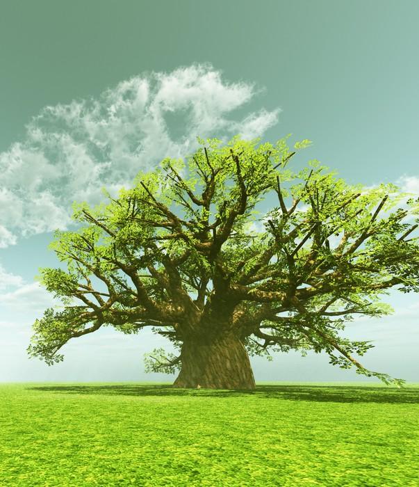 Vinylová Tapeta Působivý baobab - Témata