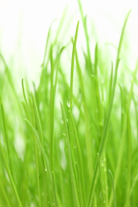 Vinylová Tapeta Zelená tráva na bílém pozadí. - Roční období