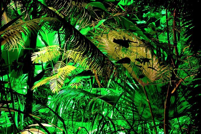Vinylová Tapeta Deštný prales ve skleníku - Příroda a divočina