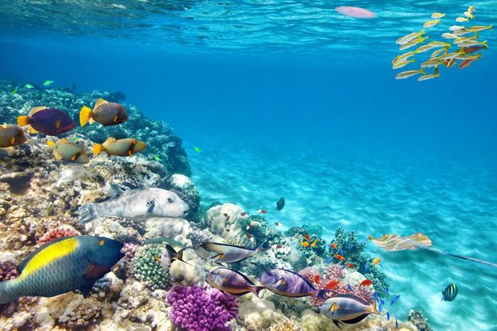 Fototapete unterwasserwelt  Fototapete Unterwasserwelt mit Korallen und tropischen Fischen ...