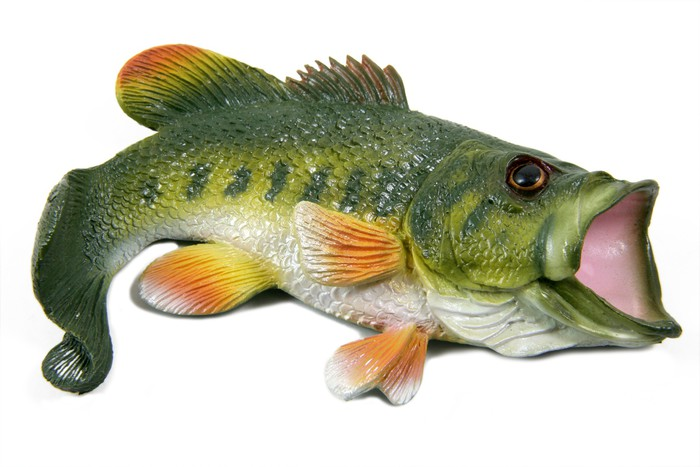 the characteristics of the large mouth bass Are other fish and animals affected by largemouth bass virus lmbv is a virus of the type that affects only cold-blooded animals.