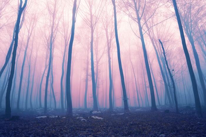 Vinylová Tapeta Fantasy color foggy fairytale forest - Lesy
