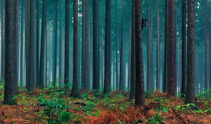 Tableau sur Toile Bajkowy Las - Forêt