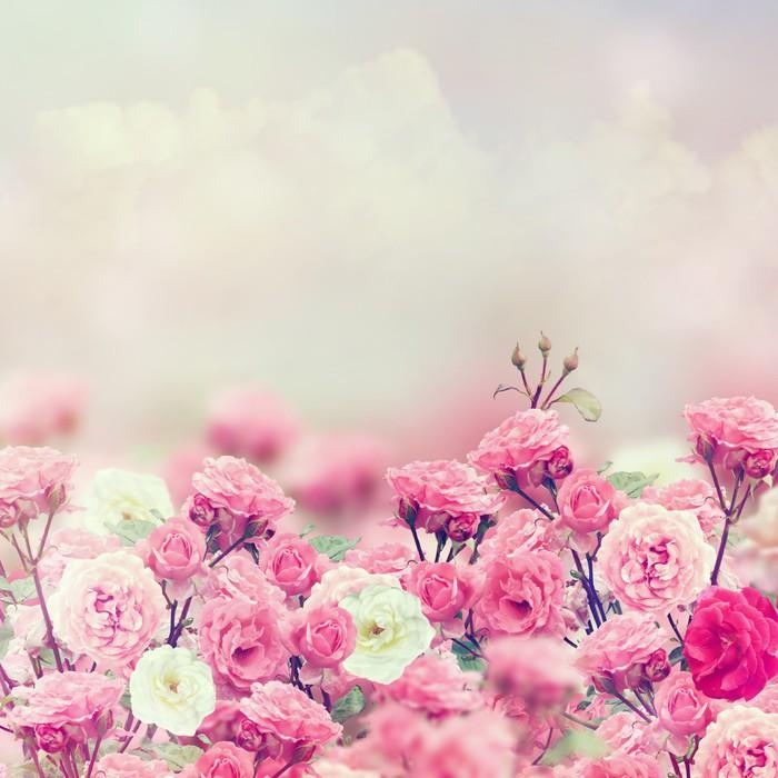 papier peint rose flowers pixers nous vivons pour changer. Black Bedroom Furniture Sets. Home Design Ideas