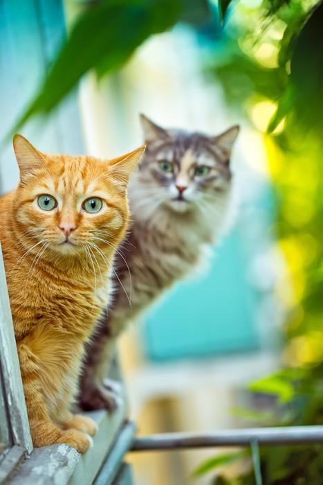 Sticker rouge et chat gris assis sur le rebord de la for Assis a la fenetre