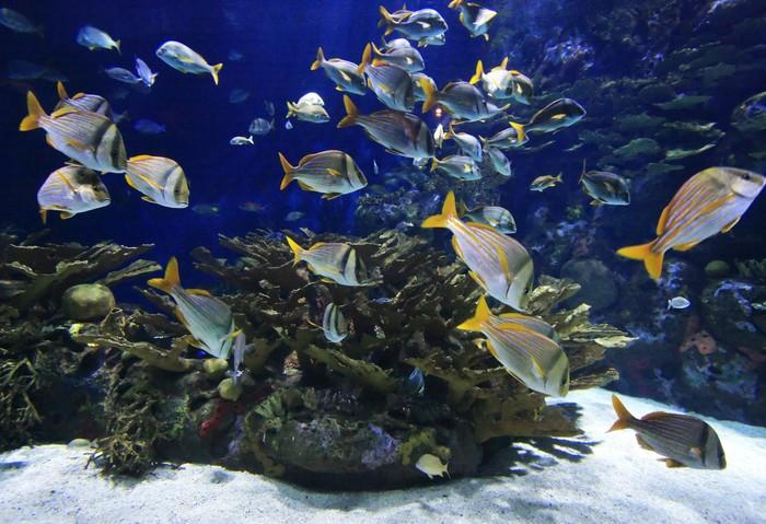 Vinylová Tapeta Podvodní obraz útesů a barevných ryb - Témata