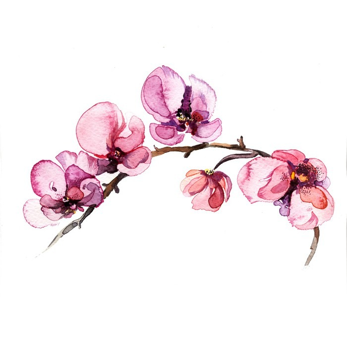 Fensteraufkleber Das Aquarell Blumen Orchidee auf dem weißen ...