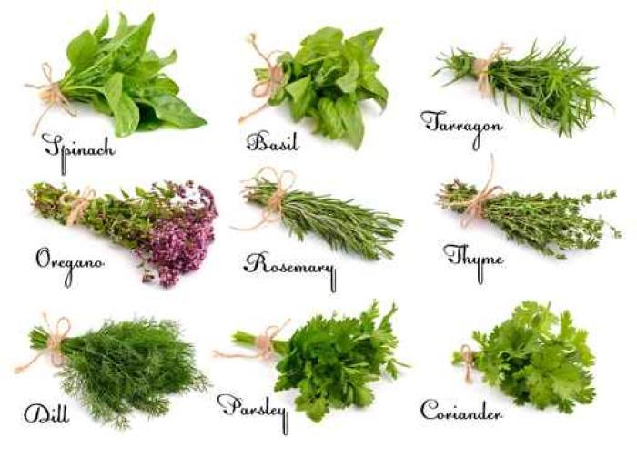 Vinilo Pixerstick Colección de hierbas y especias para cocinar ...
