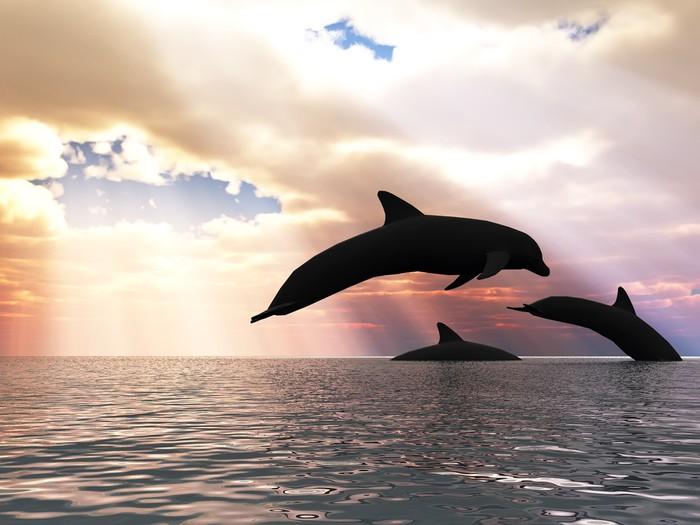 Kinderkamer Lamp Dolfijn : Fotobehang drie dolfijnen drijvend op de oceaan controle lamp