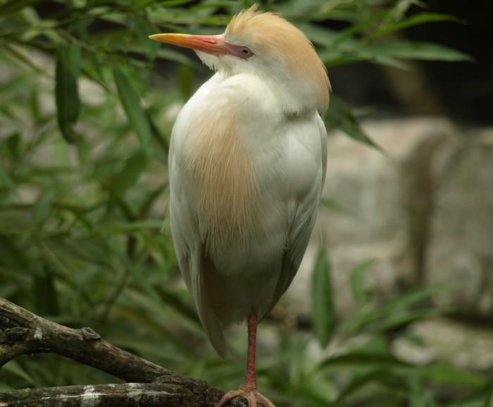 Vinylová Tapeta Malé Tropical Bird - Ptáci