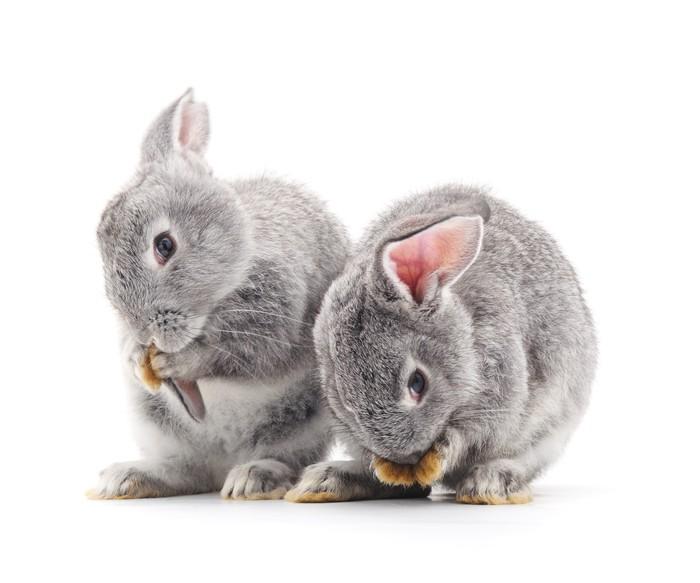 Babykamer Behang Konijn : Fotobehang baby konijnen u pixers we leven om te veranderen