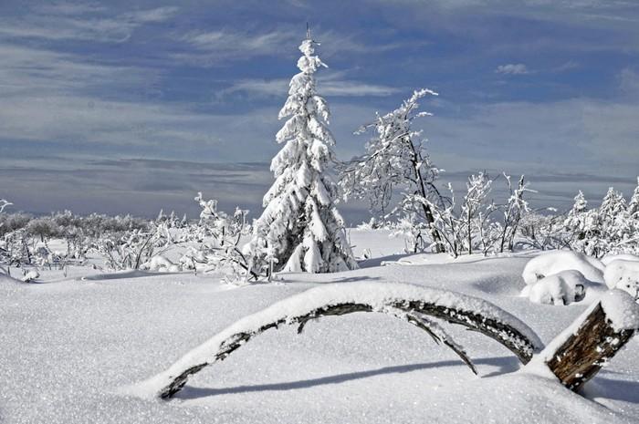 Vinylová Tapeta Verschneite Landschaft v Nationalpark Schwarzwald - Roční období
