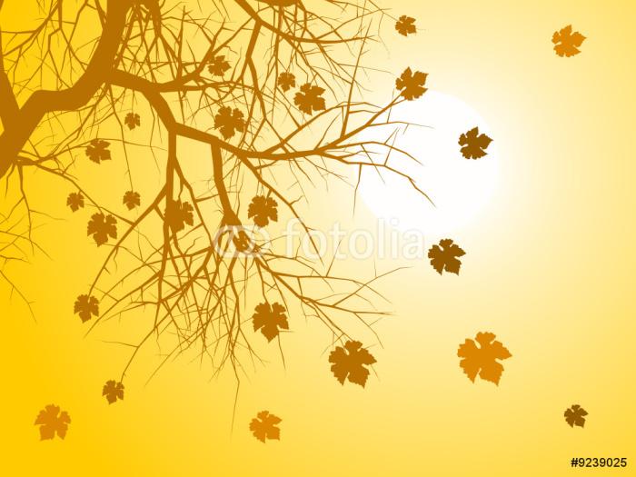 Vinylová Tapeta Podzimní listí pozadí vektor - Roční období