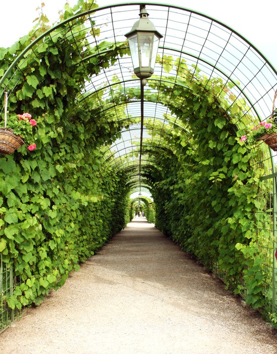 Vine arbor tunnel Wall Mural - Vinyl - iStaging