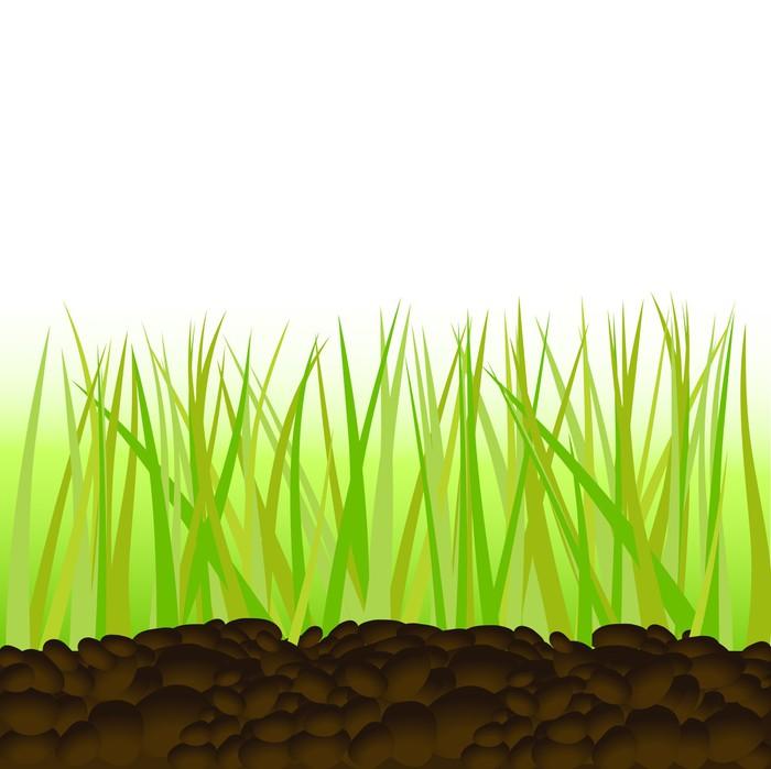 Vinylová Tapeta Zelená tráva. Vektorové ilustrace - Rostliny