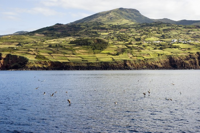 Vinylová Tapeta Pohled na kulturní krajinu ostrova Pico, Azory - Ostrovy