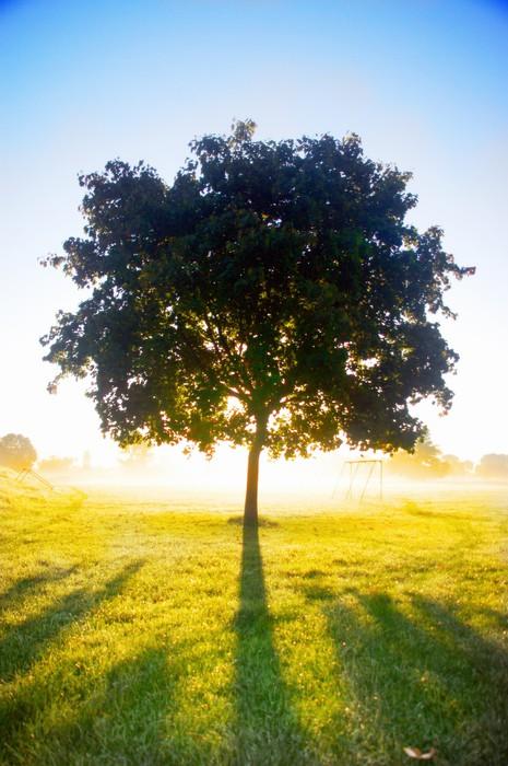 Vinylová Tapeta Lonley strom v jasném slunci - Příroda a divočina