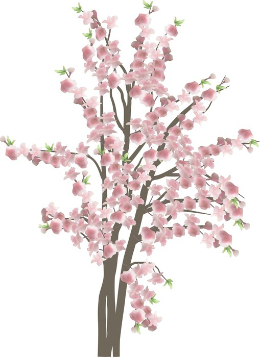 Cherry tree with large pink flowers isolated on white wall mural cherry tree with large pink flowers isolated on white vinyl wall mural trees mightylinksfo