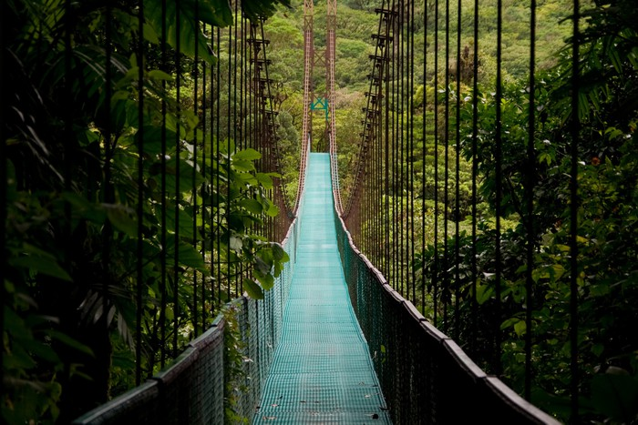 a hanging bridge in the costa rican jungle Wall Mural - Vinyl -