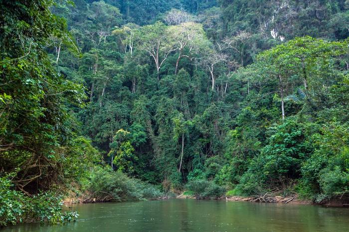 Papier Peint Vinyle Jungle tropical - Forêt
