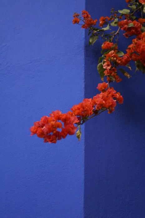 Fototapete majorelle blau pixers wir leben um zu - Fototapete blau ...