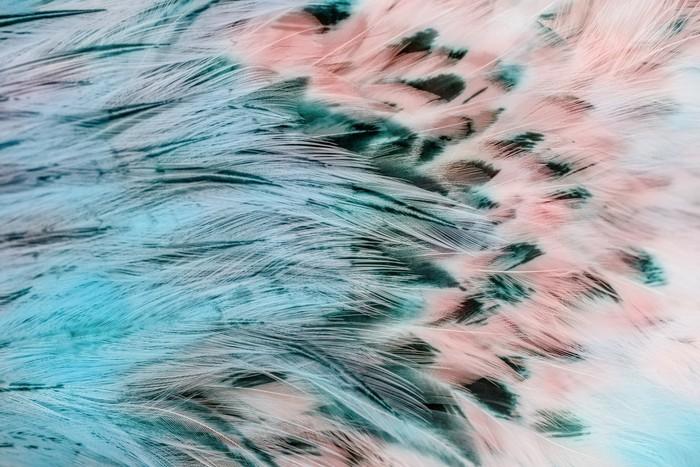 Papier peint vinyle Groupe de plumes marron brillant d'un oiseau -