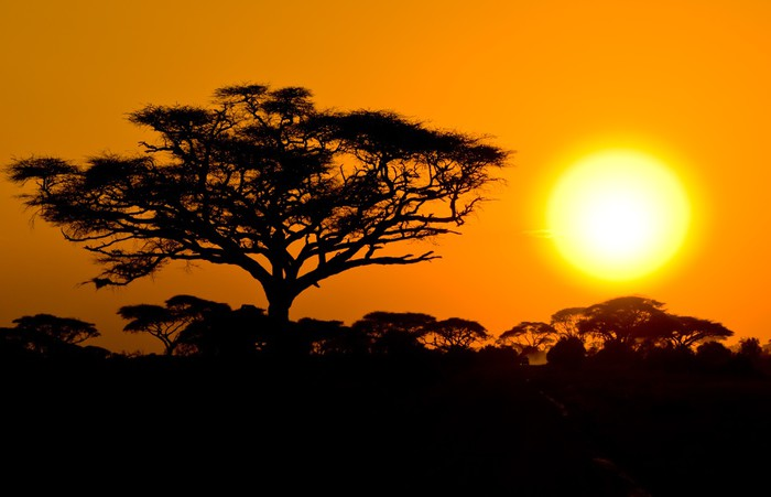 African sunset in savannah kenya wall mural pixers for African sunset wall mural
