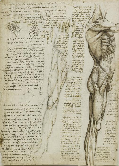 Türaufkleber Leonardo da Vinci - Anatomische Studie • Pixers® - Wir ...